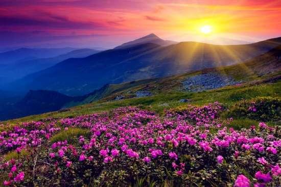 Картина по номерам 40x50 Закат солнца над цветущими горами